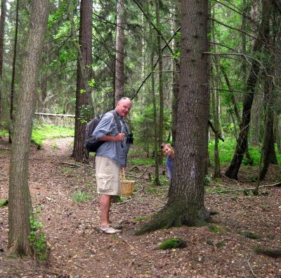 Undrar om det inte finns troll i den här skogen ... ?