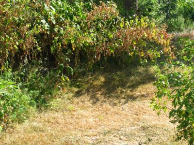 Ex hallon och gräsmatta ...