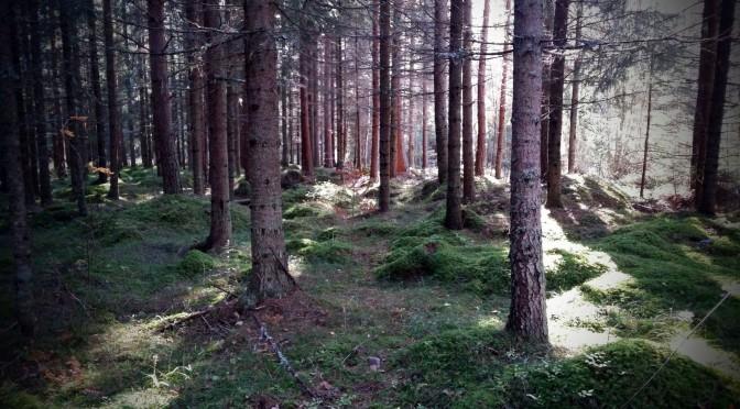 Förtrollad skog …?
