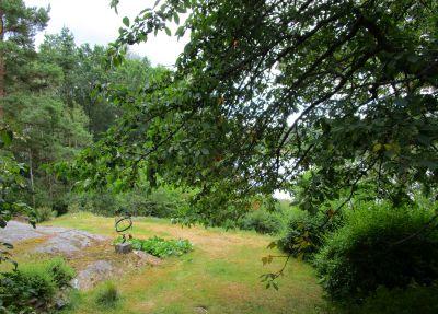 Vet inte om det syns, men körsbärsträdet är fortfarande fullt av körsbär - brukar vara länsat efter några dagar av fåglarna ...
